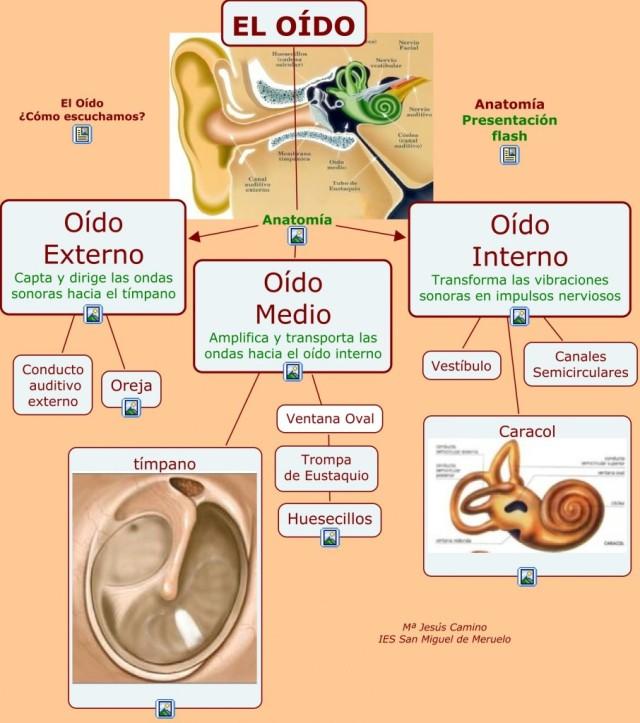 El Oído. Mapa Conceptual. « Hacemos Música, Compartimos Música.