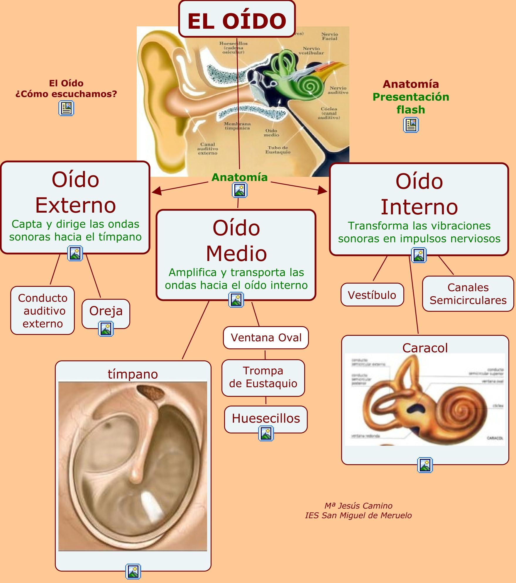 Investiga sobre la fisica: Anatomía y funcionamiento del oido